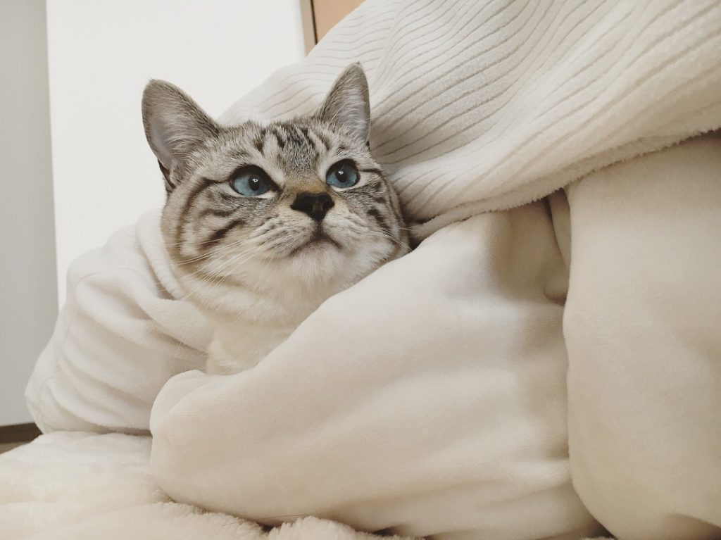 ベッドに入ってくる愛猫