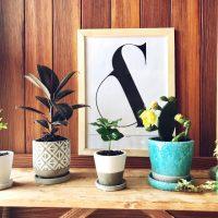 インテリアのアクセントに♪「グリーン&植木鉢」の楽しみ方3つ