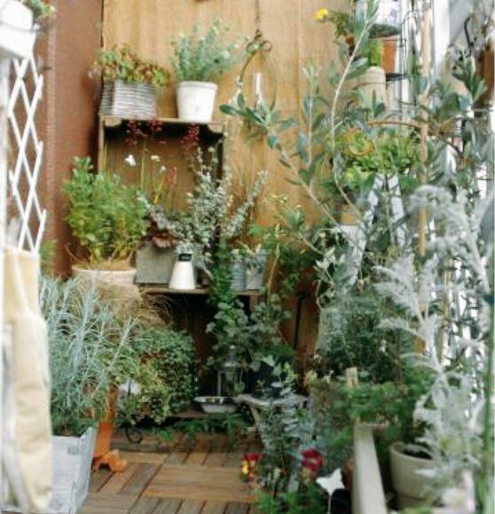 お庭のハーブ