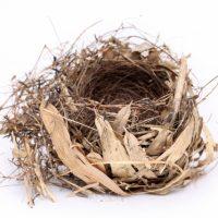 「鳥の巣」を2単語の英語で言うと?