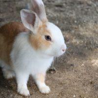 「帽子からウサギを出す」の意味って?動物にまつわる英語フレーズ2つ