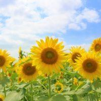 暑さに負けず夏を楽しむために!朝の「夏バテ防止対策」3つ