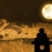 「お団子」は何て言う?秋の風物詩「お月見」に関する英語表現4つ