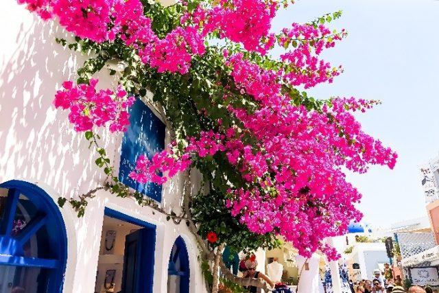 人生で1度は訪れたい憧れの地!サントリーニ島で迎えた絶景朝時間