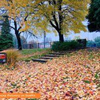 シアトル★カラフルな秋の絨毯