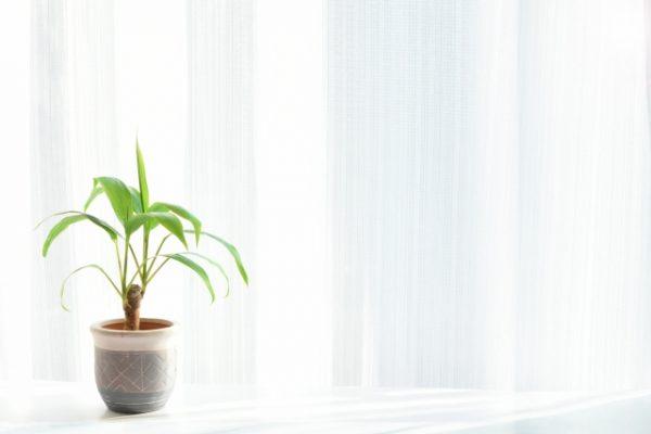 観葉植物とカーテン