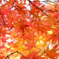 秋到来!英語の「Fall」と「Autumn」の違いって?