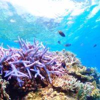 「サンゴ礁」を2単語の英語で言うと?