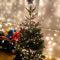 生のクリスマスツリーを買ってみる