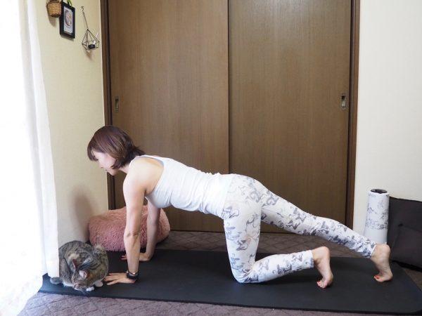 【お腹に縦線プロジェクト】ハイプランクからのひざタッチ!「腹直筋トレーニング」
