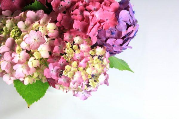 あじさいの花束
