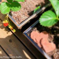 家庭菜園の季節