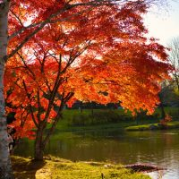 日本の秋の風物詩!「紅葉」を2単語の英語で言うと?